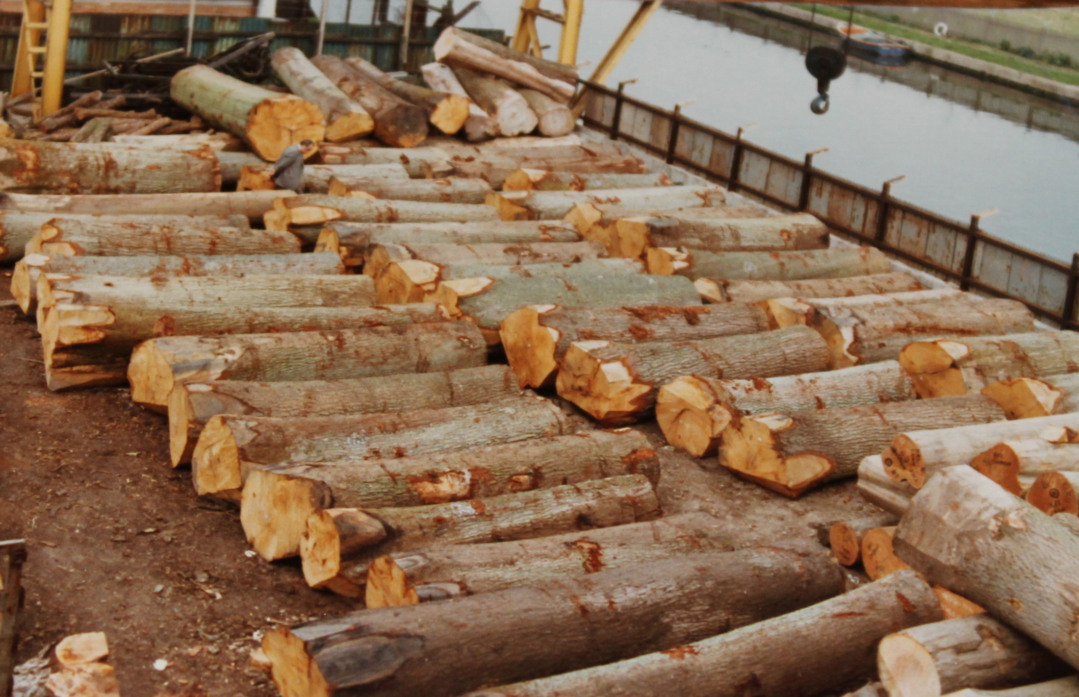 veneer Grade oak Logs for veneer